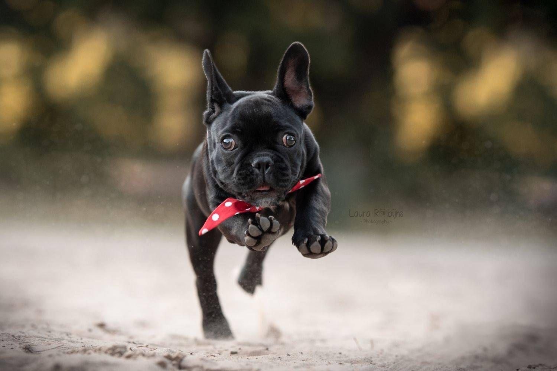 honden in actie fotografie