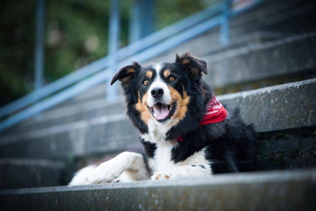 honden stadsfotografie
